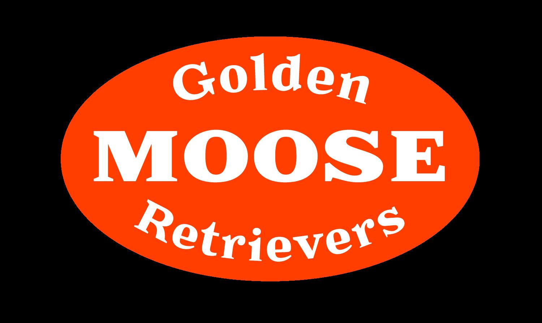moose golden retrievers, breeder in upstate ny